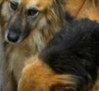 Adozioni a distanza cani
